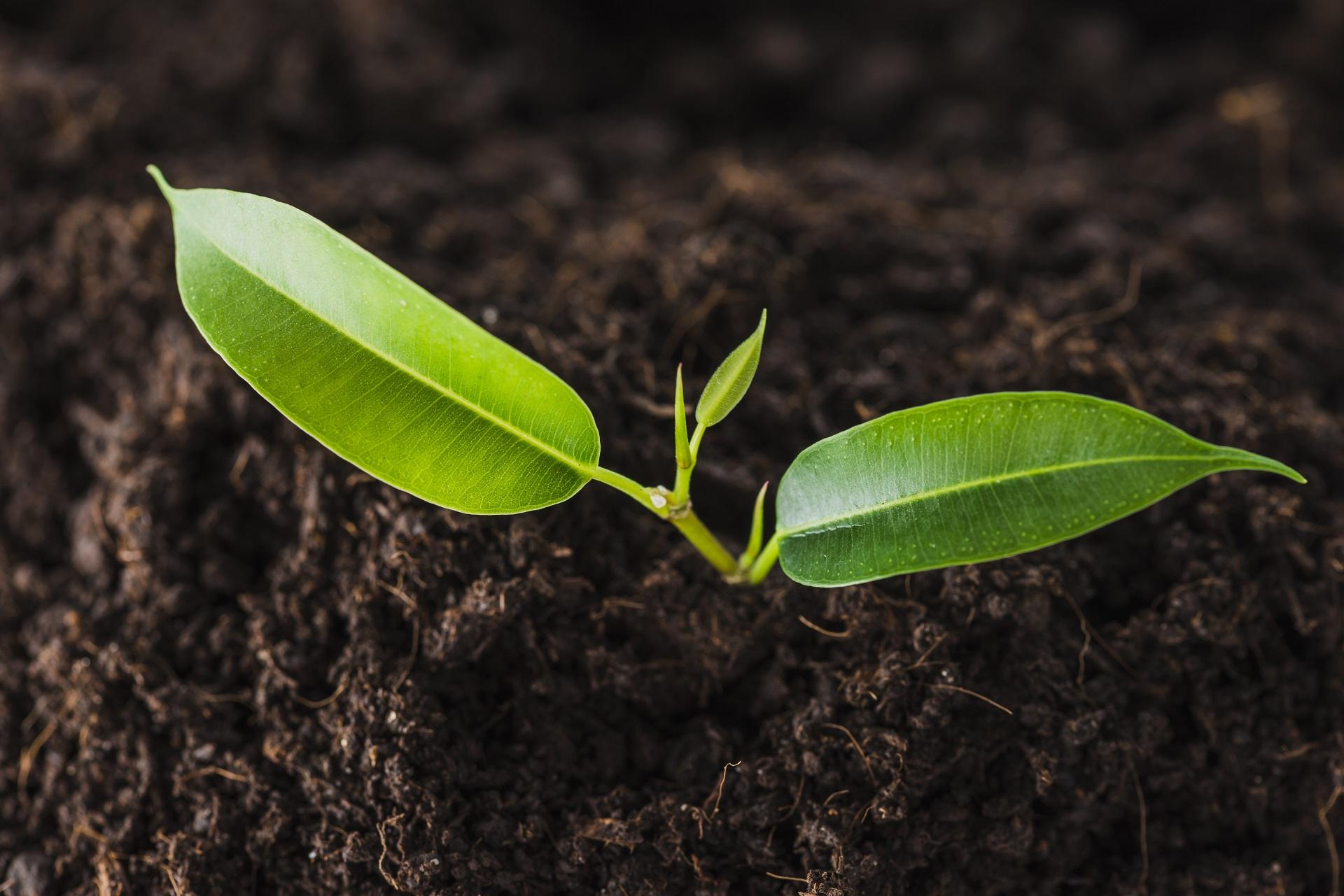 Pequena muda de árvore crescendo na terra