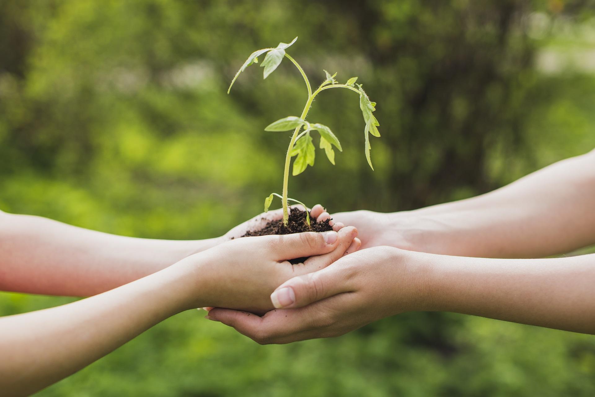 Mãos segurando uma muda de árvore
