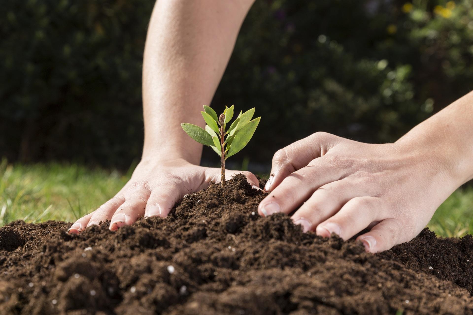 Mãos mexendo na terra e plantando uma muda
